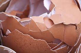 ground eggshells can you eat egg shells for calcium healthy food tribe