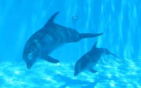 Male Dolphin Anatomy Dolphin Reproduction Dolphin Facts And Information