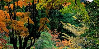 easy to treatment for ornamental trees for landscape eliseoalonso