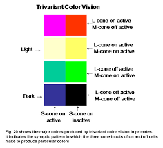 Colors That Color Blind Can See Color Vision By Peter Gouras U2013 Webvision