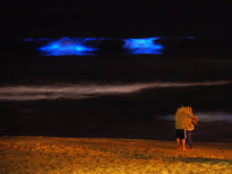 these beaches glow neon blue in the middle of the night u2014 here u0027s