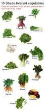 15 shade tolerant vegetables gardening 101 pinterest gardens