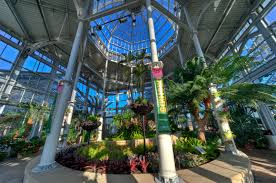 Ginter Botanical Garden Orchids Galore In The Conservatory Now Through April 22 Lewis