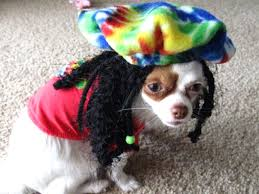 the 100 silliest pet halloween costumes 1