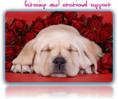 pet bereavement canine angel s rest pet bereavement canine angel has a truly