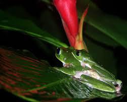 amazon rainforest native plants 5 best amazon rainforest expeditions review
