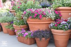 Container Gardening Ideas Container Gardening Ideas For Flowers Resolve40