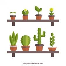 cactus vectors photos and psd files free download