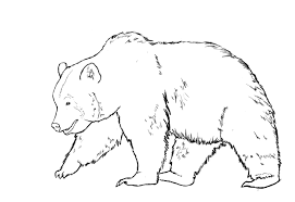coloring graceful drawing bear drawn grizzly 1