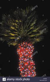 los angeles christmas lights christmas lights decoration