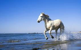white mustang horse wonderful white horse wallpaper 1334 1920 x 1200 wallpaperlayer com