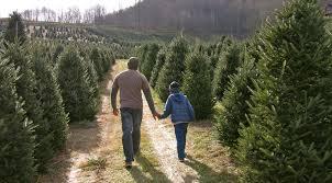 buy christmas tree christmas tree farms buy haywood