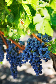 jenae sitzes 8 california wine country vacation ideas