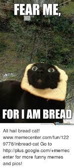 Cat Breading Meme - 25 best memes about bread cat bread cat memes