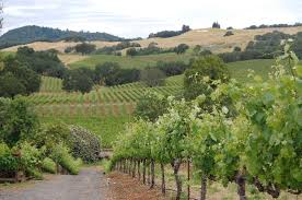 country towns wine country towns getting proactive about drought uncorked the