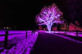 hudson gardens christmas lights christmas lights at hudson gardens album on imgur