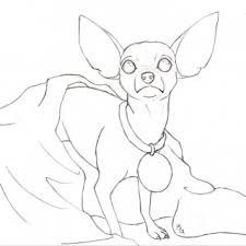 how to draw chihuahua coloring pages page 2 drawing litle pups