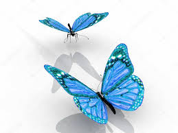 the beautiful butterfly with wings stock photo njaj 23294364