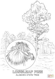 alabama state tree coloring page free printable coloring pages
