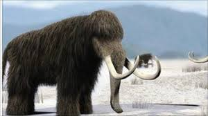 scientists bring woolly mammoths bbc newsbeat