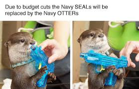 Otter Meme - navy otters animals know your meme