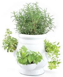 Indoor Herb Pots Window Box - windowsill herb garden kit roselawnlutheran