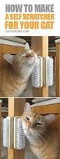 best 25 cat hammock ideas on pinterest diy cat hammock cat