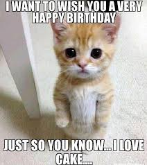 Cat Birthday Memes - image result for cat birthday meme happy pinterest meme