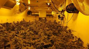 how to produce 1 gram watt of cannabis from your grow light