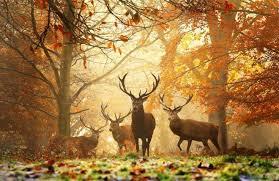 wildlife images Deer wildlife photography 3 jpg