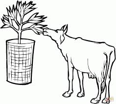 cute cow coloring page wecoloringpage cute pages of a