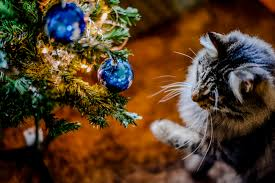 christmas cat hazards christmas cat dangers and poisons blue cross