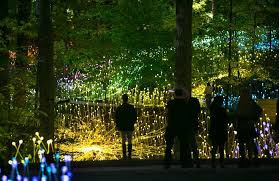atlanta botanical garden lights atlanta botanical garden receives 1 million grant atlanta intown