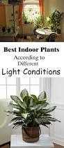 Indoor Plant Design by 25 Best Indoor Plant Lights Ideas On Pinterest Indoor Plants