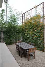 living privacy fence shrubs best idea garden