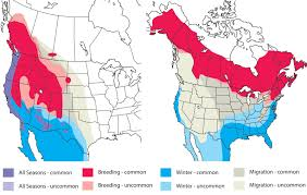 Hummingbird Map The Yellow Rumped Warbler Will Probably Be Split Into Different