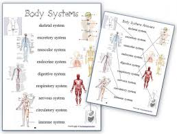 human body systems free anatomy matching page and body systems