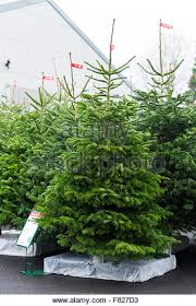garden centre christmas tree stock photos u0026 garden centre