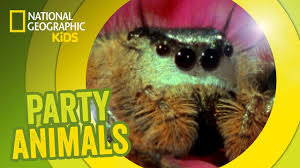 spooky spider feat parry gripp music video party animals