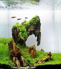 Aquascape Moss Aquascaping Driftwood Page Fish Tank Pinterest Driftwood