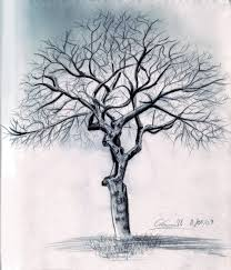 pictures pencil drawings of trees leaves drawing art gallery