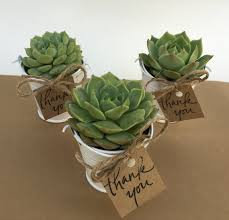plant wedding favors 12 succulent wedding favors succulents succulent party