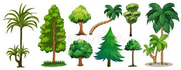 different types of trees different types of trees stock vector illustration of object 85257517
