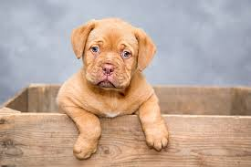 pet urine removal treatment in los angeles ca