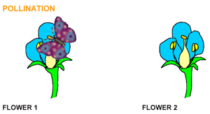 Where Is The Pollen Produced In A Flower - what is pollination