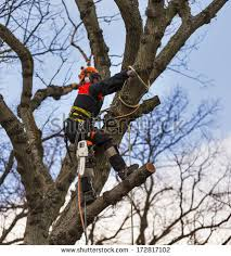 tree surgeon stock images royalty free images vectors