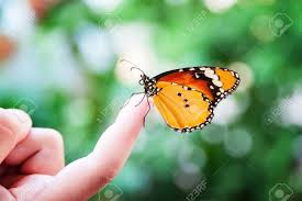 butterfly on kid s finger stock photo picture and royalty free