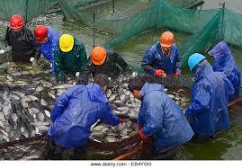 aquaculture fish ponds stock photos u0026 aquaculture fish ponds stock