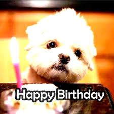 Cute Memes - incredible happy birthday memes for you top collections