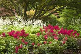 Flower Shrubs For Shaded Areas - shade gardening colorful shade tolerant plants birds u0026 blooms